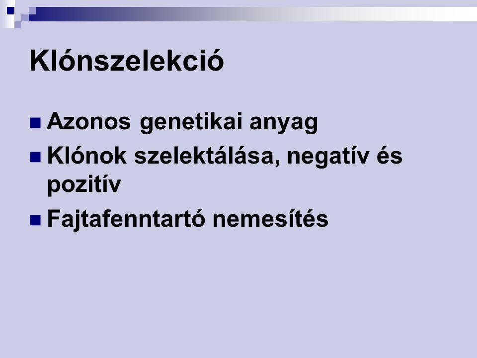 Klónszelekció Azonos genetikai anyag Klónok szelektálása, negatív és pozitív Fajtafenntartó nemesítés