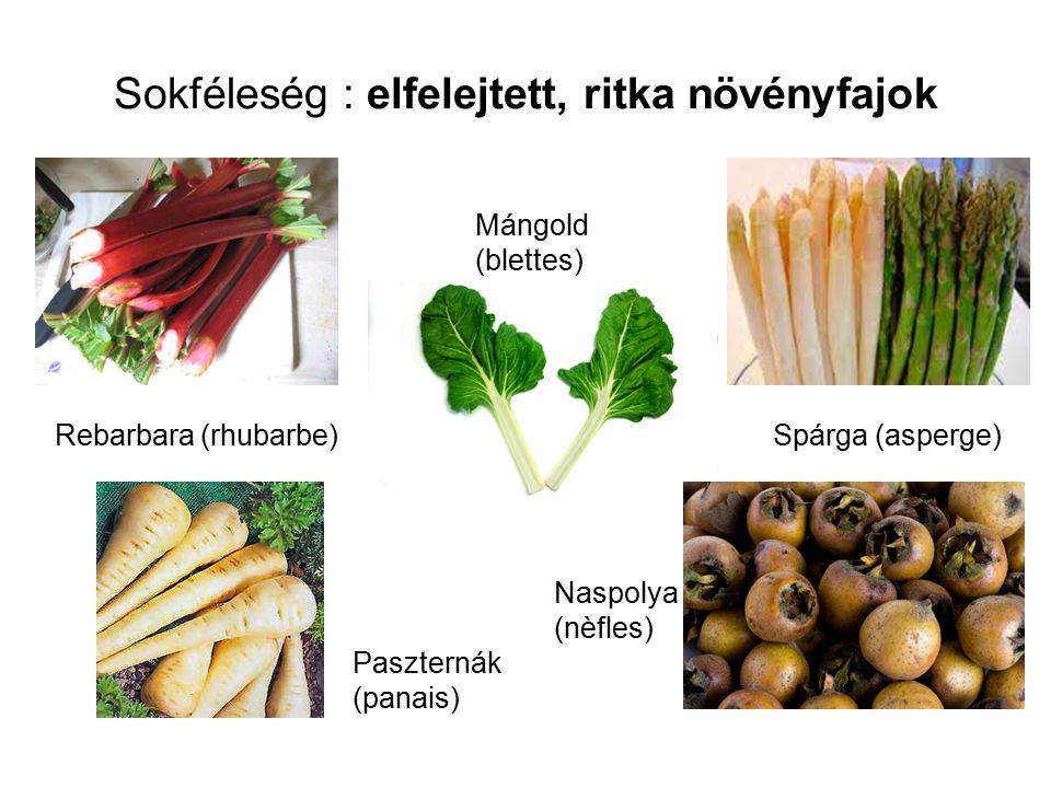 Sokféleség : elfelejtett, ritka növényfajok Rebarbara (rhubarbe) Mángold (blettes) Spárga (asperge) Naspolya (nèfles) Paszternák (panais)