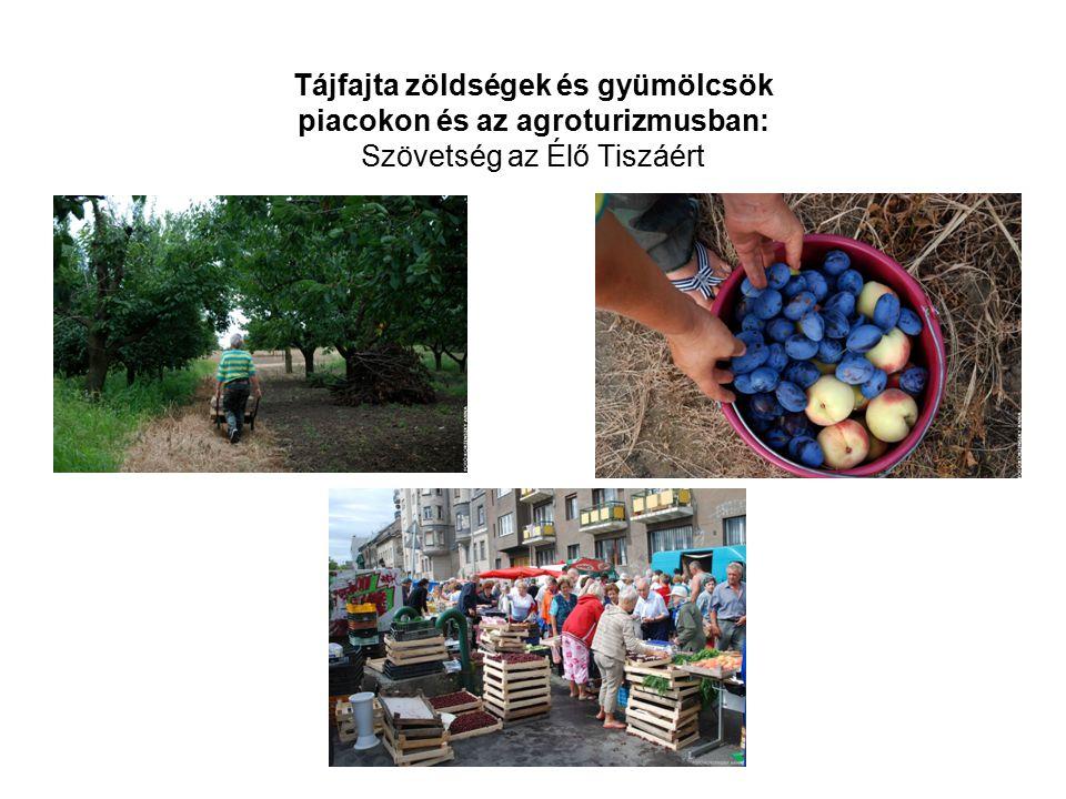 Tájfajta zöldségek és gyümölcsök piacokon és az agroturizmusban: Szövetség az Élő Tiszáért