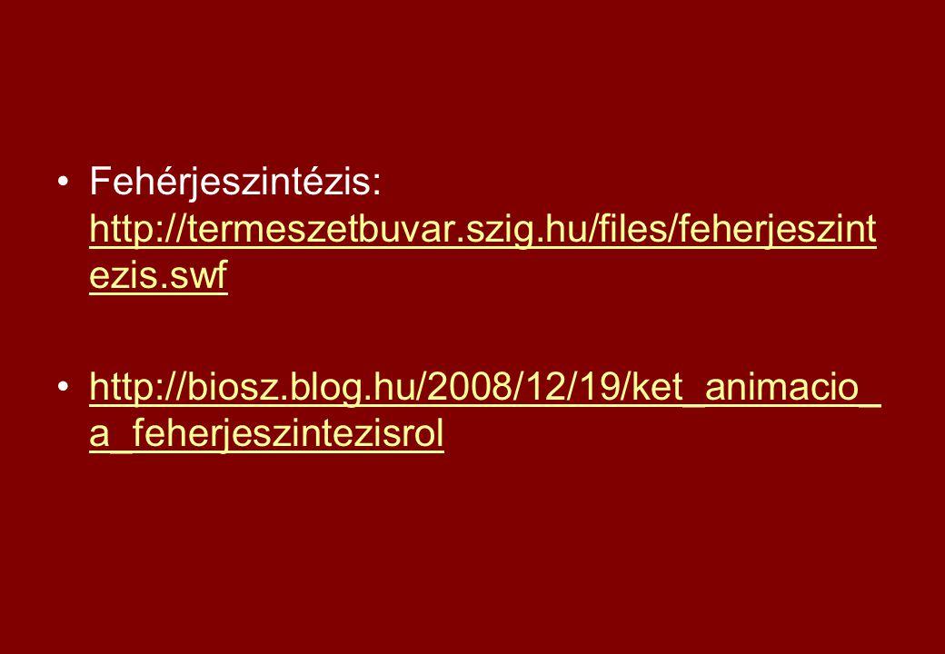 Fehérjeszintézis: http://termeszetbuvar.szig.hu/files/feherjeszint ezis.swf http://termeszetbuvar.szig.hu/files/feherjeszint ezis.swf http://biosz.blo