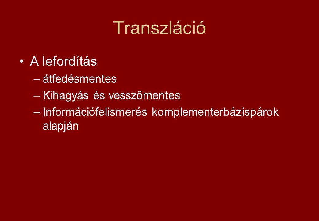 Transzláció A lefordítás –átfedésmentes –Kihagyás és vesszőmentes –Információfelismerés komplementerbázispárok alapján