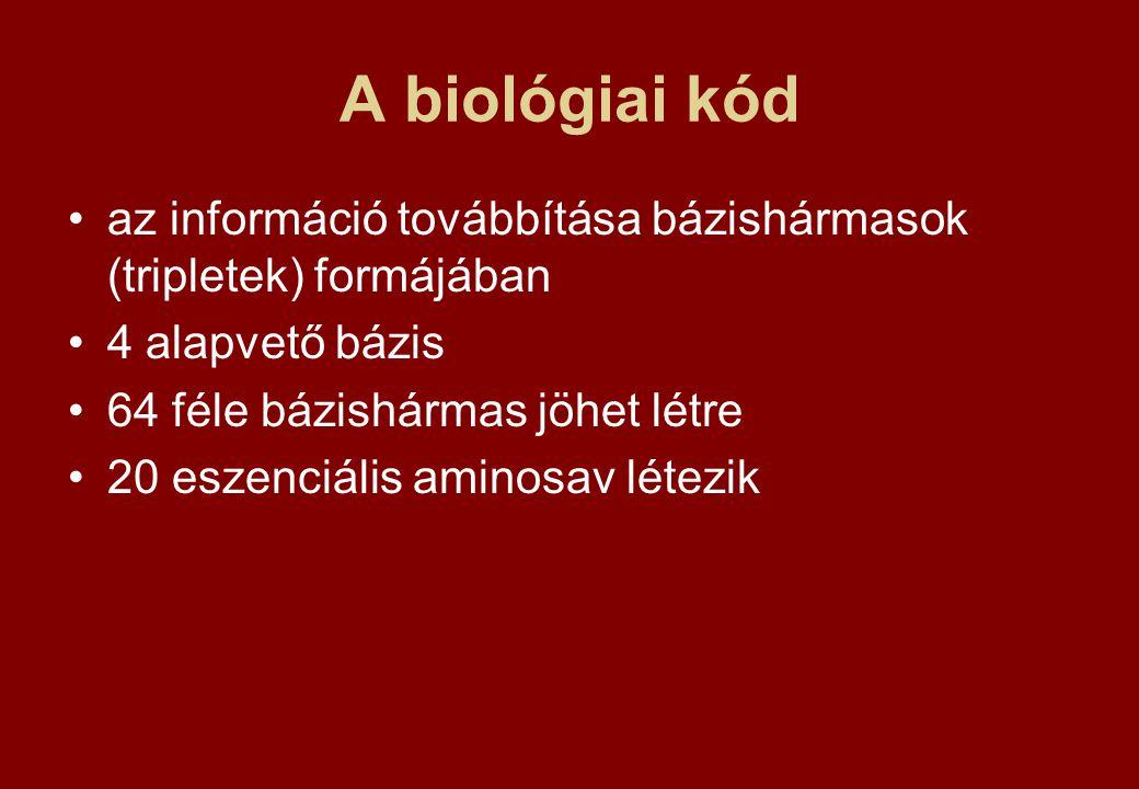 A biológiai kód az információ továbbítása bázishármasok (tripletek) formájában 4 alapvető bázis 64 féle bázishármas jöhet létre 20 eszenciális aminosa