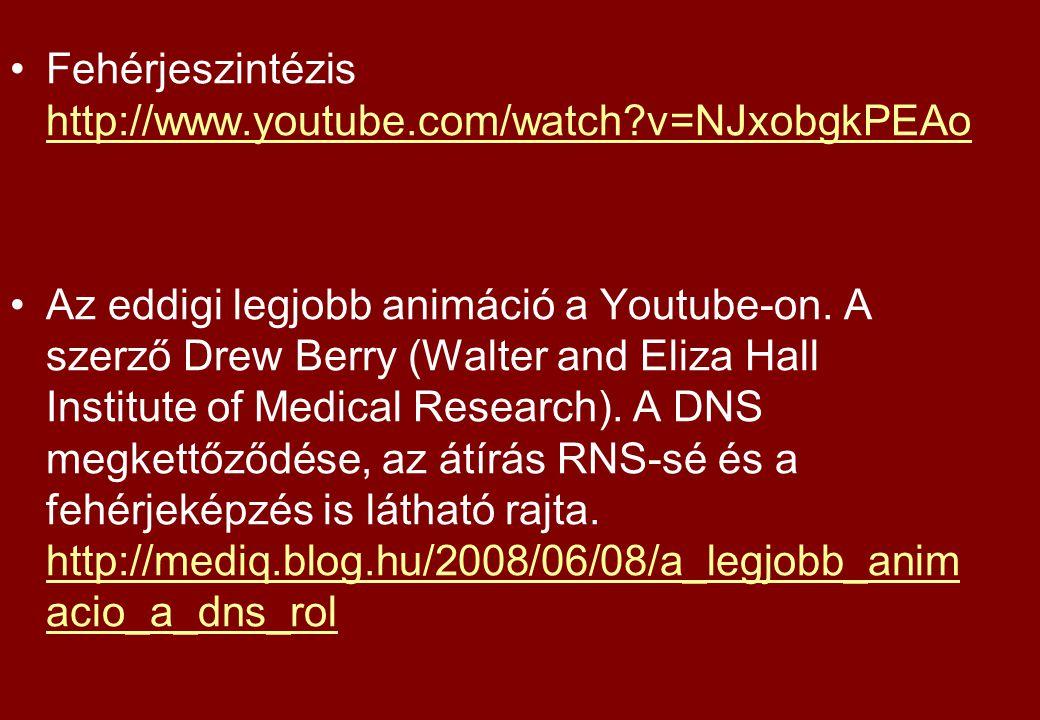 Fehérjeszintézis http://www.youtube.com/watch?v=NJxobgkPEAo http://www.youtube.com/watch?v=NJxobgkPEAo Az eddigi legjobb animáció a Youtube-on. A szer