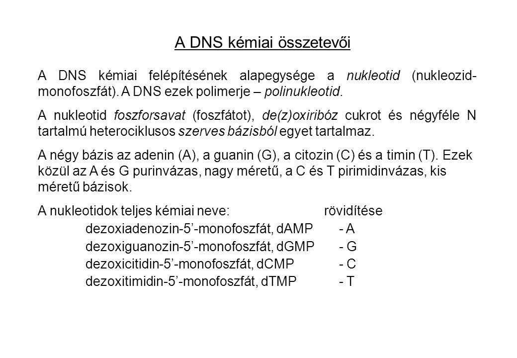 A DNS kémiai összetevői A DNS kémiai felépítésének alapegysége a nukleotid (nukleozid- monofoszfát). A DNS ezek polimerje – polinukleotid. A nukleotid