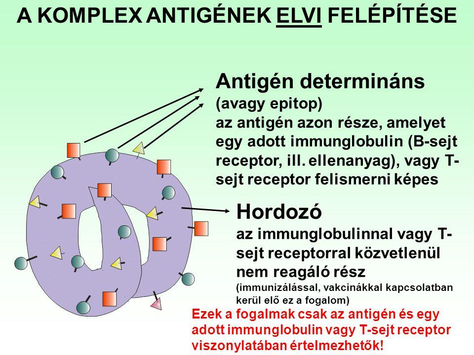 Antigén determináns (avagy epitop) az antigén azon része, amelyet egy adott immunglobulin (B-sejt receptor, ill. ellenanyag), vagy T- sejt receptor fe