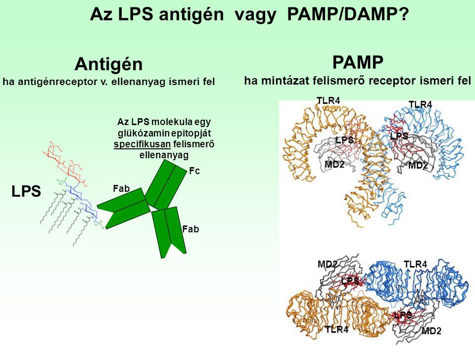 Az LPS antigén vagy PAMP/DAMP? Antigén ha antigénreceptor v. ellenanyag ismeri fel PAMP ha mintázat felismerő receptor ismeri fel TLR4 MD2 LPS Fc Az L
