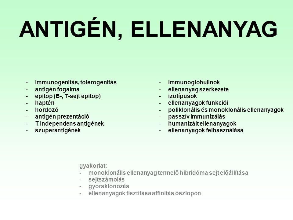 Monoklonális ellenanyag előállítás menete (vázlatosan) - egér/patkány beoltása antigénnel - a célsejteket tartalmazó lép vagy nyirokcsomók izolálása, homogenizálása - lépből származó plazmasejtek és B-sejt eredetű egér tumorsejtek (plazmacitóma/ mielóma sejtek) fúziója - Az ellenanyag termelő klónok szelekciója/azonosítása (több lépésben) A létrejövő hibridómák folyamatosan szaporodnak és ellenanyagot termelnek, ami a tápoldatukból kinyerhető (1.) (2.)