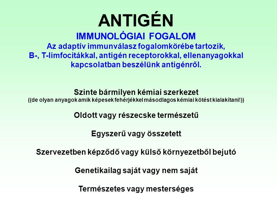 VÉDETT EGYÉN szérum ellenanyag Humán immunglobulin transzgenikus egér immunizálás egér monoklonális ellenanyagok immunizálás humán monoklonális ellenanyagok humanizált, egér monoklonális ellenanyagok (rekombináns módszerekkel) Passzív immunizálás VESZÉLYEZTETETT EGYED Az immunrendszer nem a szokásos módon aktiválódik Azonnal hat Átmeneti védelem/hatás Immunoglobulin lebomlás!