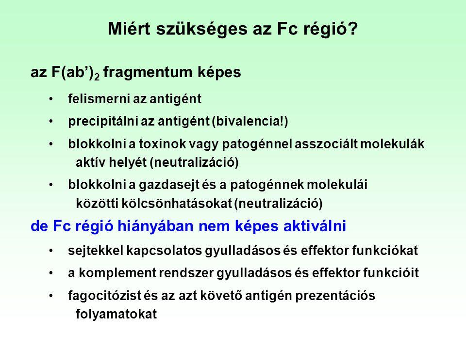 Miért szükséges az Fc régió? felismerni az antigént precipitálni az antigént (bivalencia!) blokkolni a toxinok vagy patogénnel asszociált molekulák ak