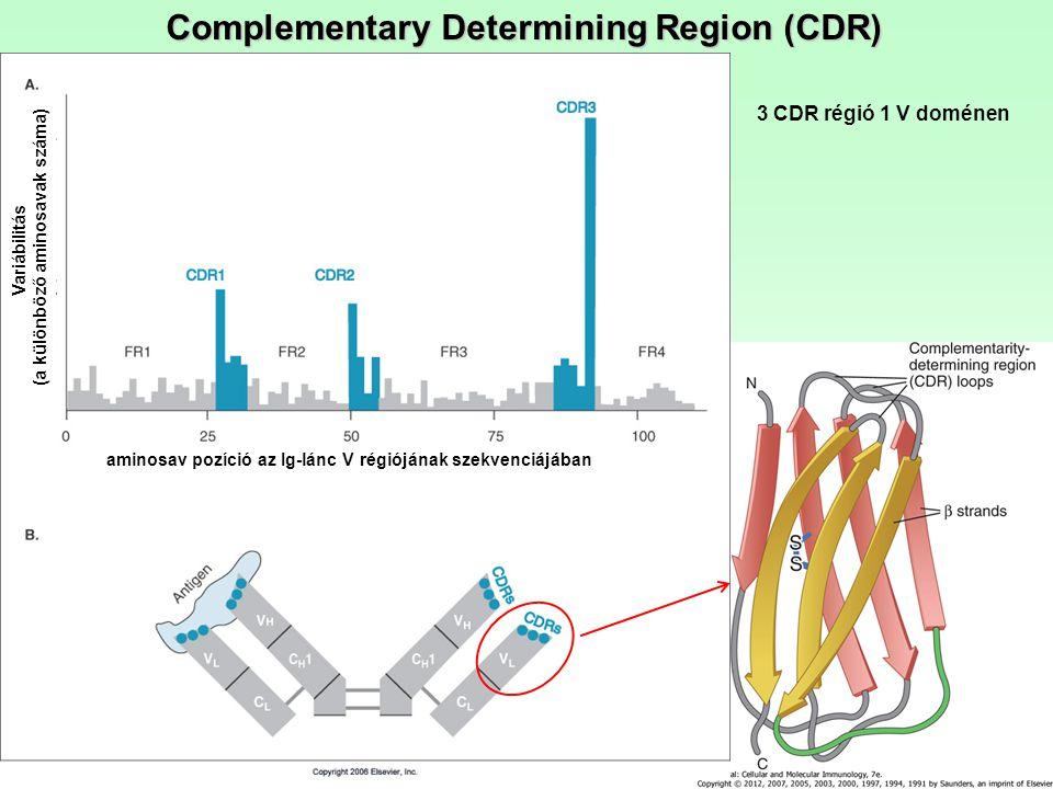 Complementary Determining Region (CDR) aminosav pozíció az Ig-lánc V régiójának szekvenciájában Variábilitás (a különböző aminosavak száma) 3 CDR régi