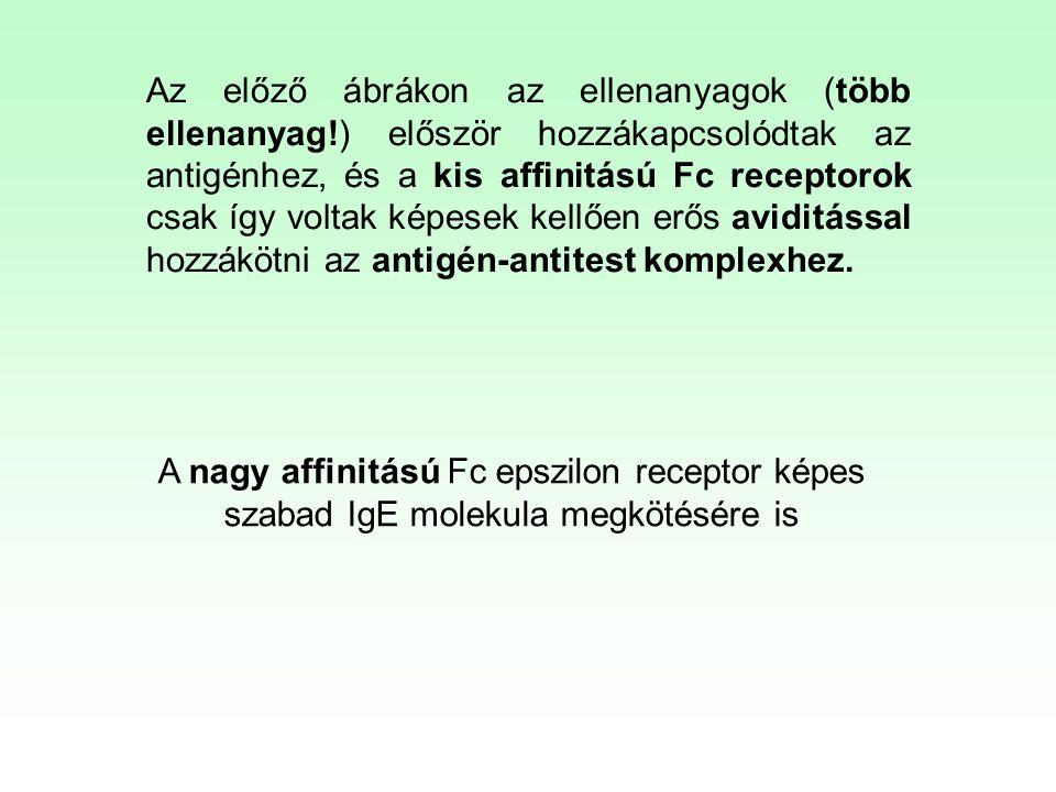 Az előző ábrákon az ellenanyagok (több ellenanyag!) először hozzákapcsolódtak az antigénhez, és a kis affinitású Fc receptorok csak így voltak képesek