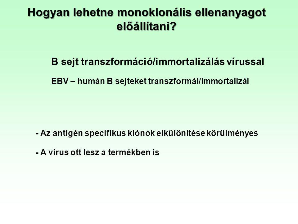 Hogyan lehetne monoklonális ellenanyagot előállítani? B sejt transzformáció/immortalizálás vírussal - A vírus ott lesz a termékben is EBV – humán B se