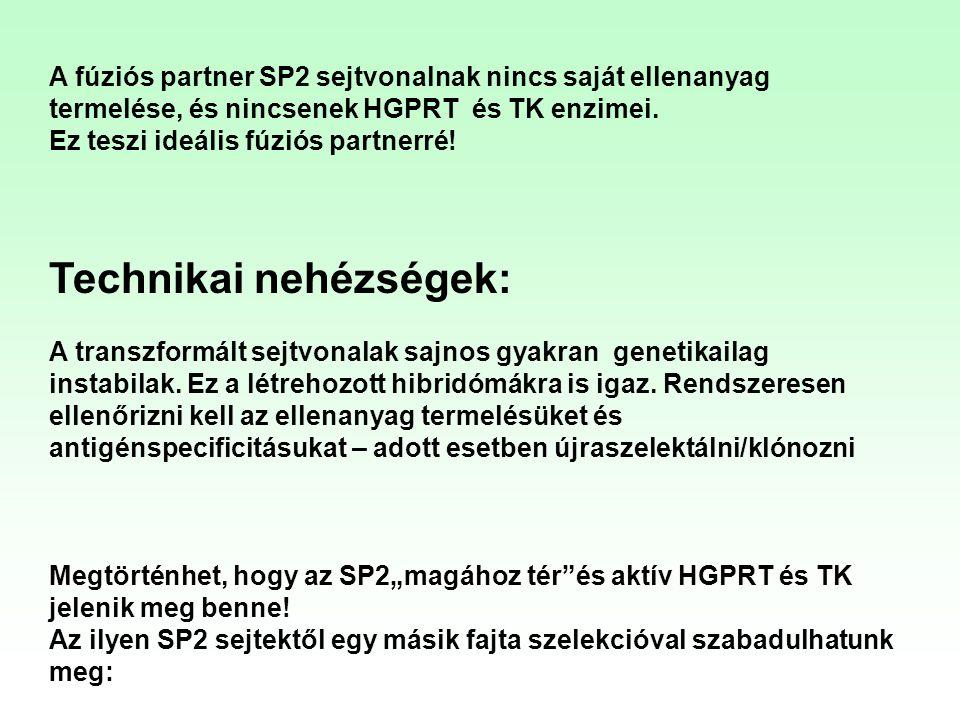 A fúziós partner SP2 sejtvonalnak nincs saját ellenanyag termelése, és nincsenek HGPRT és TK enzimei. Ez teszi ideális fúziós partnerré! Technikai neh