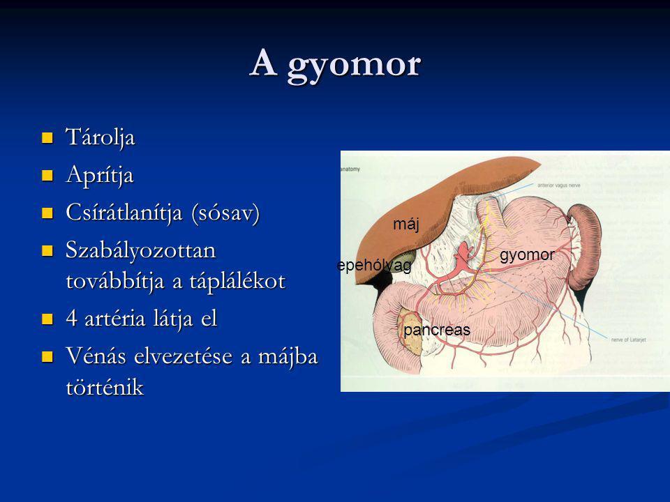 Nyelőcső betegségek kezelése GERD: GERD: 1. savgátló gyógyszer 1. savgátló gyógyszer Tartósan kell szedni Tartósan kell szedni 2. reflux ellenes műtét