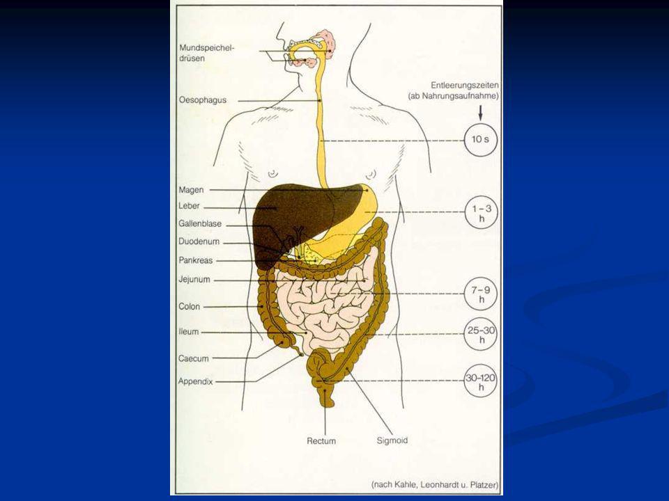 Gasztroenterológia helye A gasztroenterológia az emésztőrendszer, vagyis gasztrointesztinális (GI) traktus vizsgálatával, sebészi és belgyógyászati ke