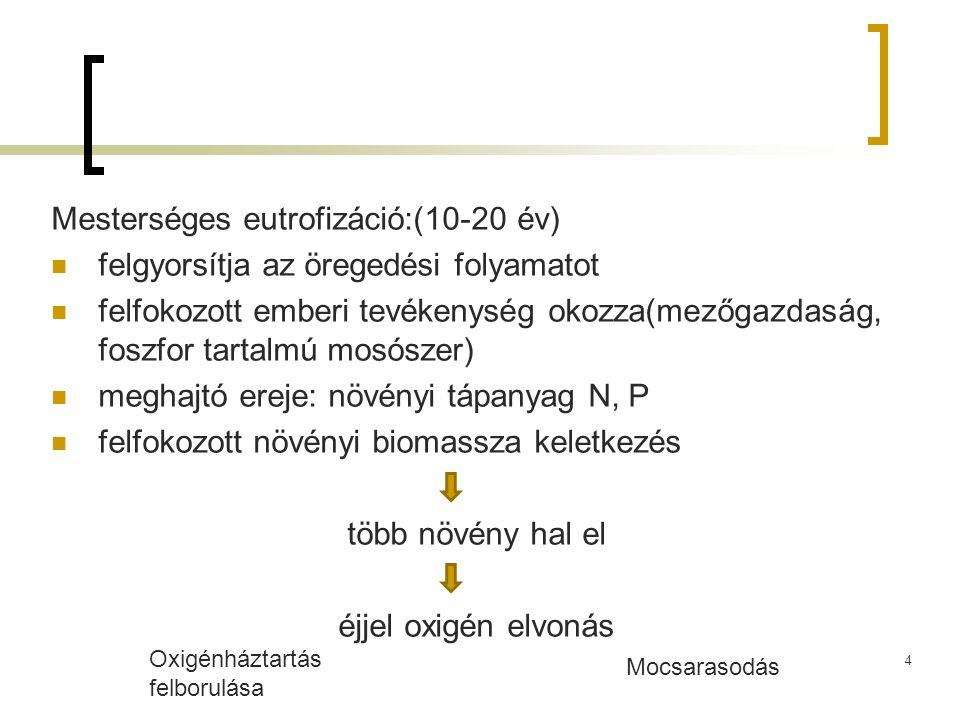 Mesterséges eutrofizáció:(10-20 év) felgyorsítja az öregedési folyamatot felfokozott emberi tevékenység okozza(mezőgazdaság, foszfor tartalmú mosószer) meghajtó ereje: növényi tápanyag N, P felfokozott növényi biomassza keletkezés több növény hal el éjjel oxigén elvonás Oxigénháztartás felborulása Mocsarasodás 4