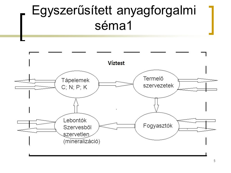 Tápelemek C; N; P; K Termelő szervezetek Lebontók Szervesből szervetlen (mineralizáció) Fogyasztók Egyszerűsített anyagforgalmi séma1 5