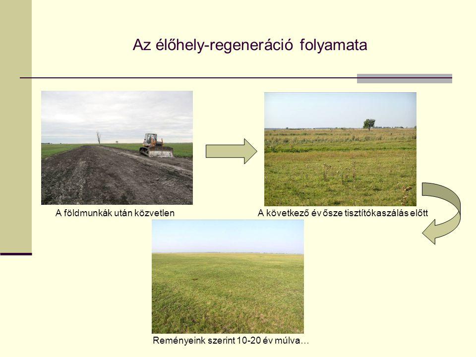 Az élőhely-regeneráció folyamata A földmunkák után közvetlenA következő év ősze tisztítókaszálás előtt Reményeink szerint 10-20 év múlva…