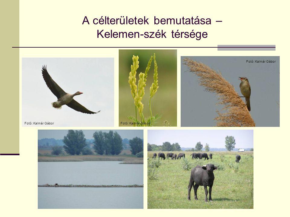 A célterületek bemutatása – Bugacpuszta térsége Natura 2000 terület – kiemelt jelentőségű természetmegőrzési terület A Szekercés-szék és térsége fokozottan védett a nemzeti parkon belül A Szekercés-szék Bioszféra rezervátum magterület, a környezete túlnyomó részt Bioszféra rezervátum II.