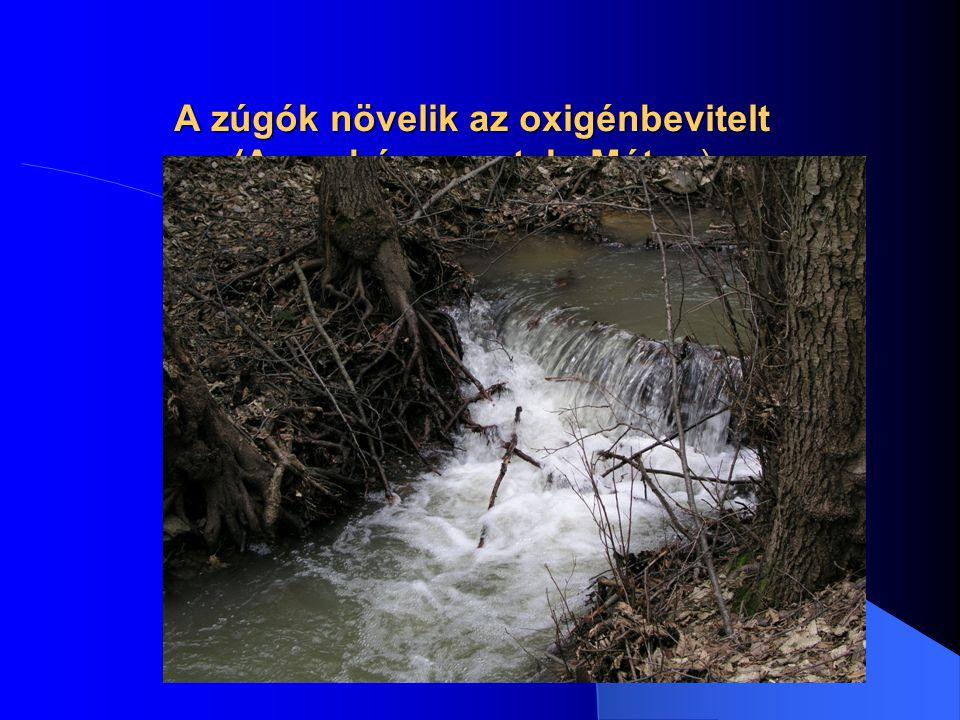 A természetes vízfolyás egyik jellemző mederkeresztmetszete (Bognár 1989)