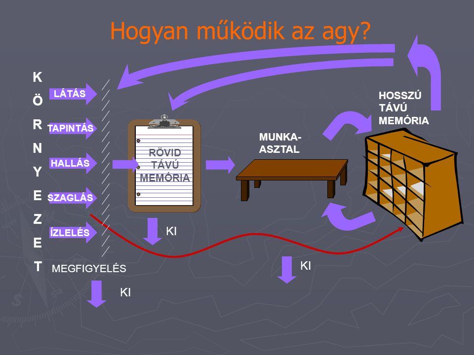 Hogyan működik az agy? KÖRNYEZETKÖRNYEZET HALLÁS HOSSZÚ TÁVÚ MEMÓRIA MUNKA- ASZTAL SZAGLÁS LÁTÁS TAPINTÁS ÍZLELÉS KI MEGFIGYELÉS KI RÖVID TÁVÚ MEMÓRIA