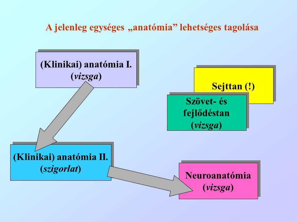 (Klinikai) anatómia I. (vizsga) (Klinikai) anatómia I. (vizsga) (Klinikai) anatómia II. (szigorlat) (Klinikai) anatómia II. (szigorlat) Neuroanatómia