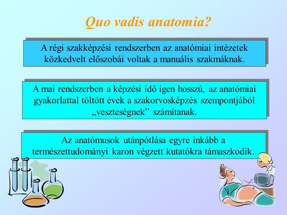 (Klinikai) anatómia I.(vizsga) (Klinikai) anatómia I.