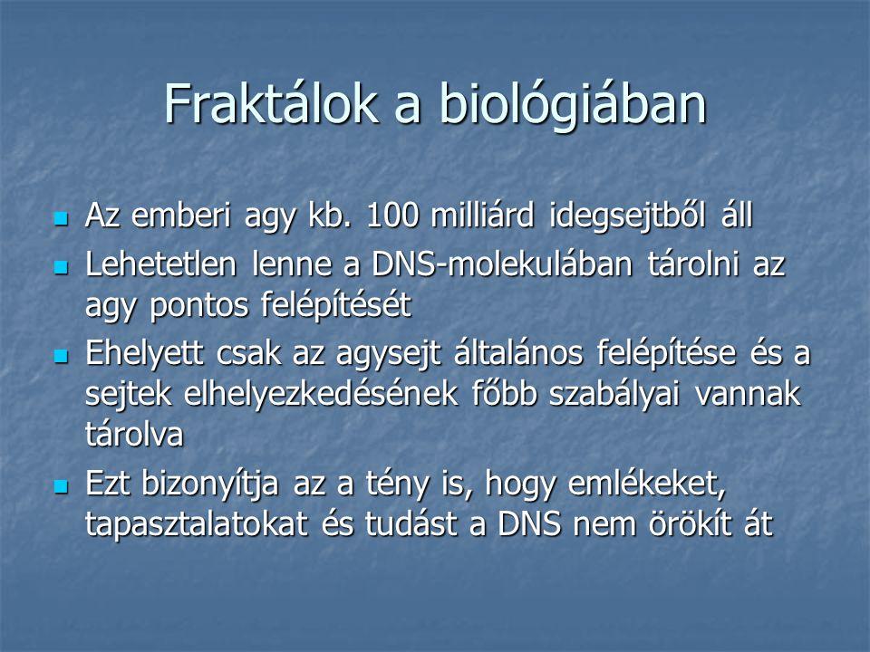 Fraktálok a biológiában Az emberi agy kb. 100 milliárd idegsejtből áll Az emberi agy kb. 100 milliárd idegsejtből áll Lehetetlen lenne a DNS-molekuláb