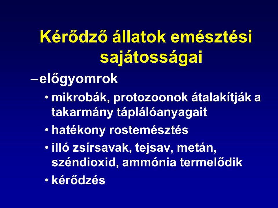 Szénhidrátok emésztése A bontás sebessége: oldható szénhidrátok < keményítő < cellulóz, hemicellulóz: Képződő termékek: –ecetsav (50-70%) rostdús takarmányozás aktivált ecetsav –zsírsavszintézis –energiaforrás –propionsav (15-30%) abrakdús takarmányozás glükóz kedvez a fehérjeszintézisnek