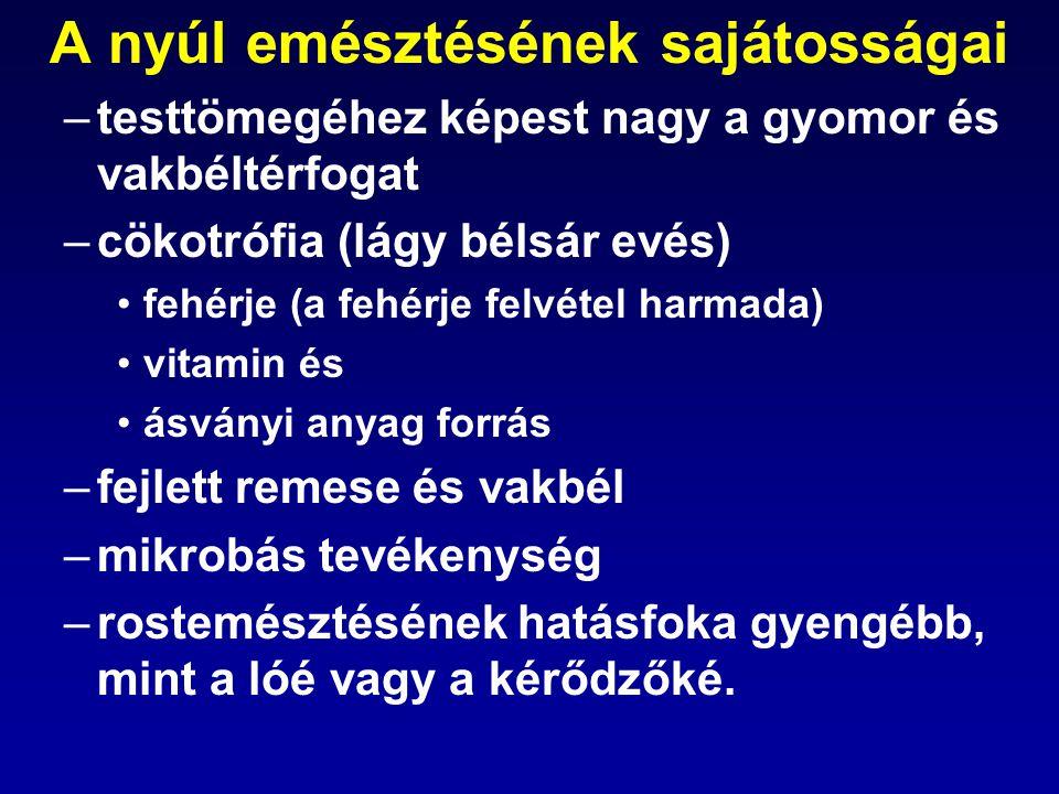 A nyúl emésztésének sajátosságai –testtömegéhez képest nagy a gyomor és vakbéltérfogat –cökotrófia (lágy bélsár evés) fehérje (a fehérje felvétel harm