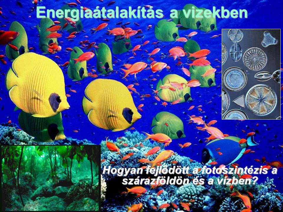 Energiaátalakítás a vizekben Hogyan fejlődött a fotoszintézis a szárazföldön és a vízben?Hogyan fejlődött a fotoszintézis a szárazföldön és a vízben?