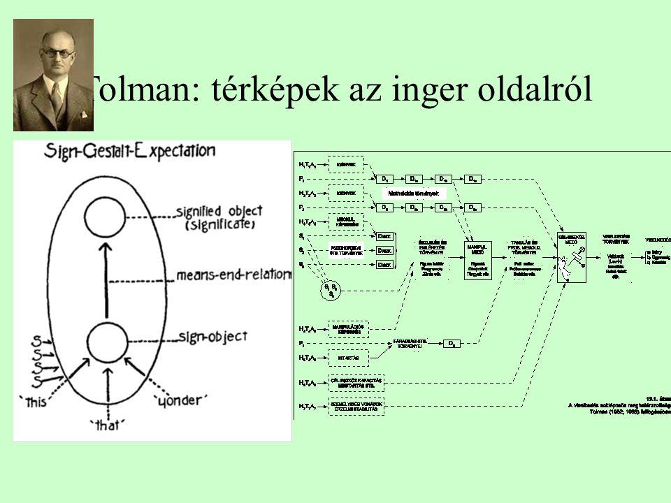 Tolman: térképek az inger oldalról