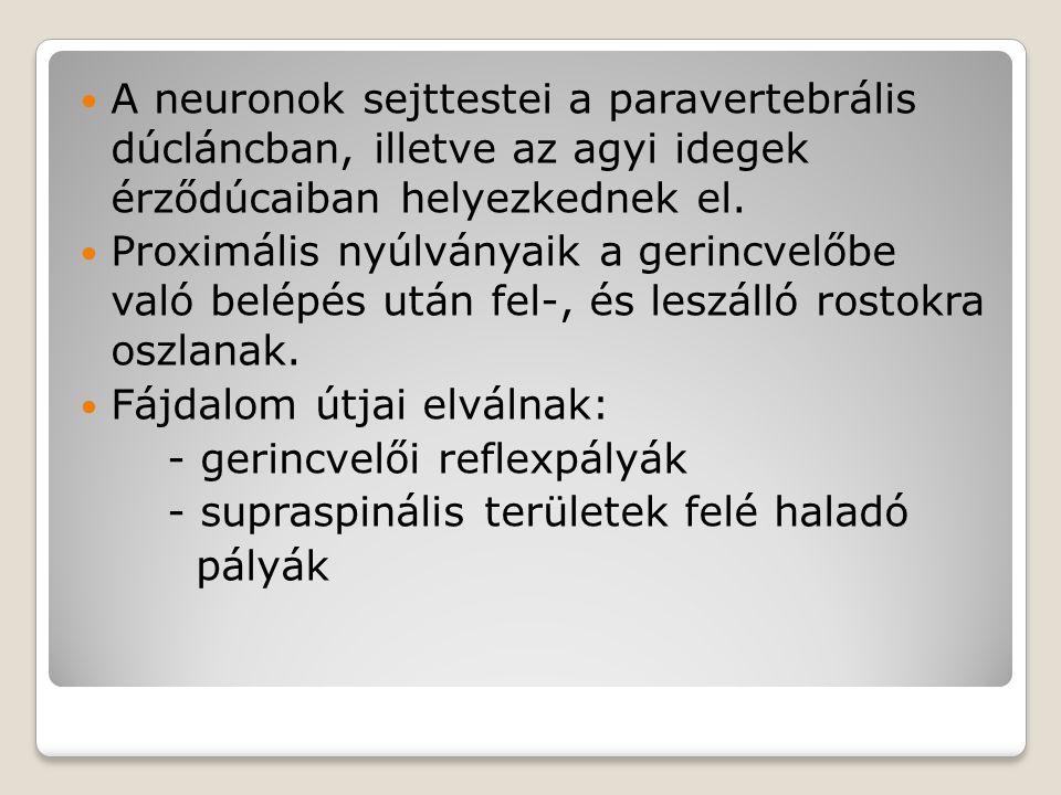 A neuronok sejttestei a paravertebrális dúcláncban, illetve az agyi idegek érződúcaiban helyezkednek el. Proximális nyúlványaik a gerincvelőbe való be