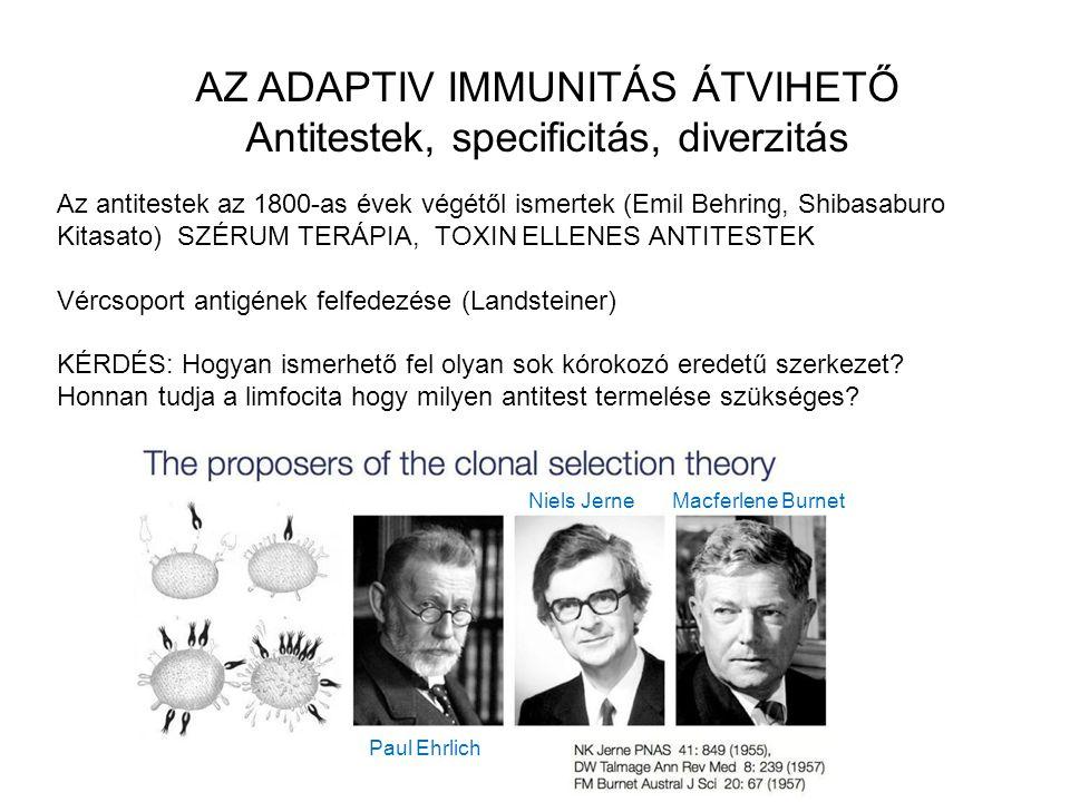AZ ADAPTIV IMMUNITÁS ÁTVIHETŐ Antitestek, specificitás, diverzitás Az antitestek az 1800-as évek végétől ismertek (Emil Behring, Shibasaburo Kitasato)