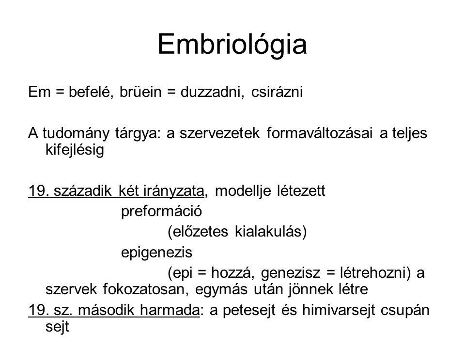 Embriológia Em = befelé, brüein = duzzadni, csirázni A tudomány tárgya: a szervezetek formaváltozásai a teljes kifejlésig 19.