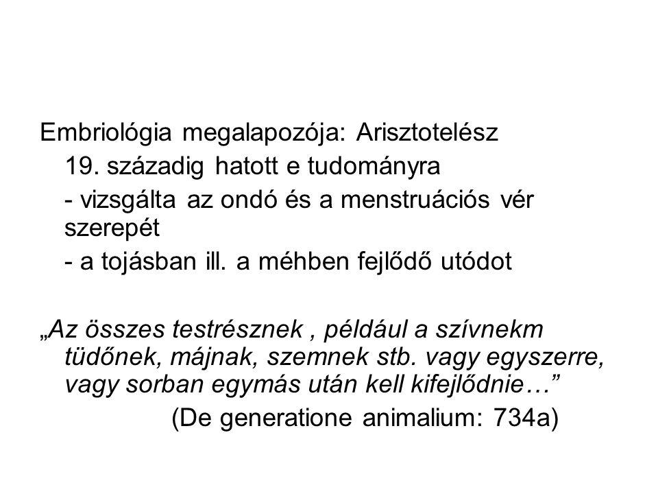 Embriológia megalapozója: Arisztotelész 19.