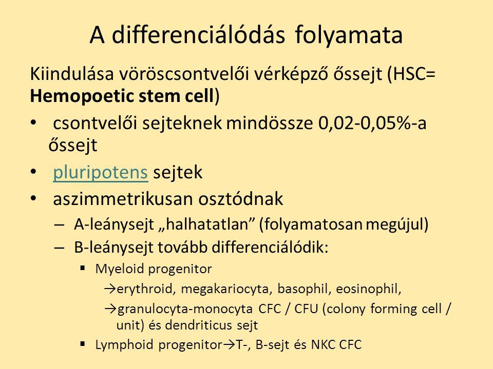"""A differenciálódás folyamata Kiindulása vöröscsontvelői vérképző őssejt (HSC= Hemopoetic stem cell) csontvelői sejteknek mindössze 0,02-0,05%-a őssejt pluripotens sejtekpluripotens aszimmetrikusan osztódnak – A-leánysejt """"halhatatlan (folyamatosan megújul) – B-leánysejt tovább differenciálódik:  Myeloid progenitor →erythroid, megakariocyta, basophil, eosinophil, →granulocyta-monocyta CFC / CFU (colony forming cell / unit) és dendriticus sejt  Lymphoid progenitor→T-, B-sejt és NKC CFC"""