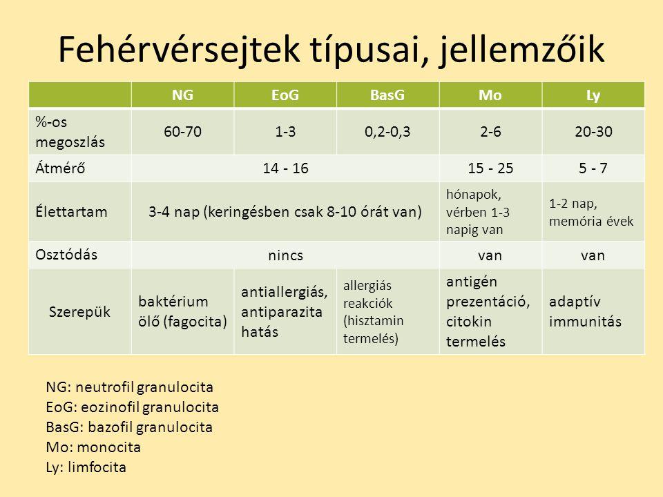 Fehérvérsejtek típusai, jellemzőik NGEoGBasGMoLy %-os megoszlás 60-701-30,2-0,32-620-30 Átmérő 14 - 1615 - 255 - 7 Élettartam3-4 nap (keringésben csak 8-10 órát van) hónapok, vérben 1-3 napig van 1-2 nap, memória évek Osztódás nincsvan Szerepük baktérium ölő (fagocita) antiallergiás, antiparazita hatás allergiás reakciók (hisztamin termelés) antigén prezentáció, citokin termelés adaptív immunitás NG: neutrofil granulocita EoG: eozinofil granulocita BasG: bazofil granulocita Mo: monocita Ly: limfocita