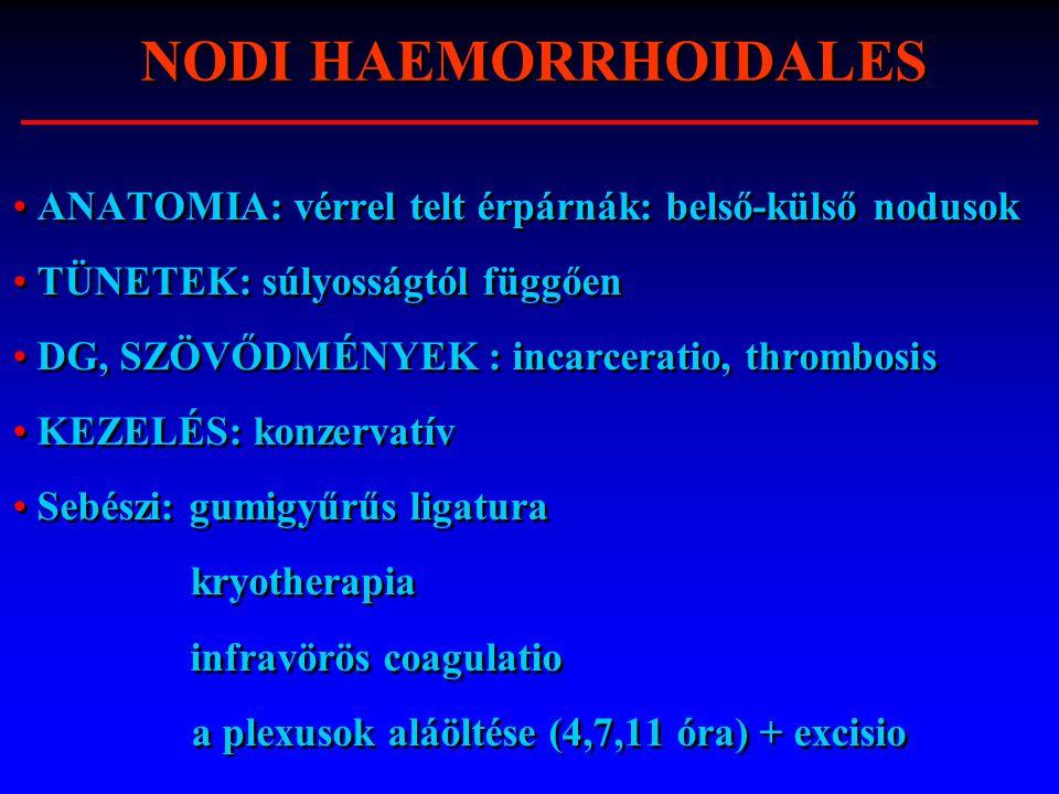 ANATOMIA: vérrel telt érpárnák: belső-külső nodusok TÜNETEK: súlyosságtól függően DG, SZÖVŐDMÉNYEK : incarceratio, thrombosis KEZELÉS: konzervatív Seb