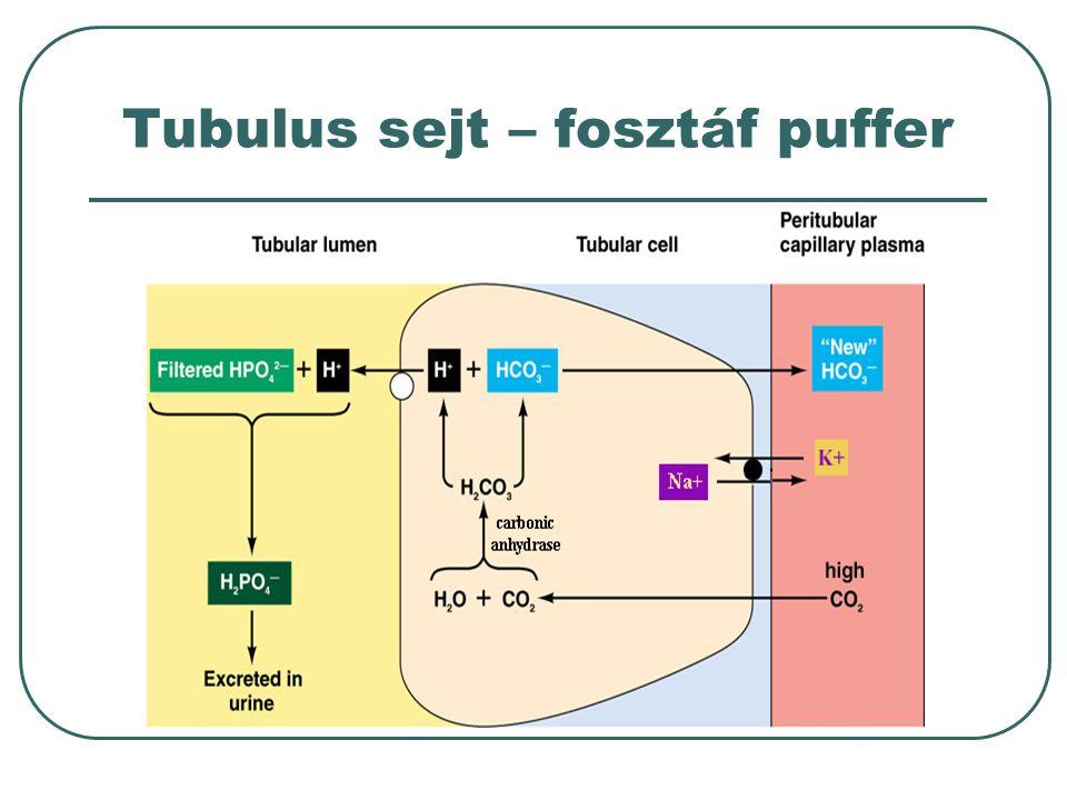 Tubulus sejt – fosztáf puffer