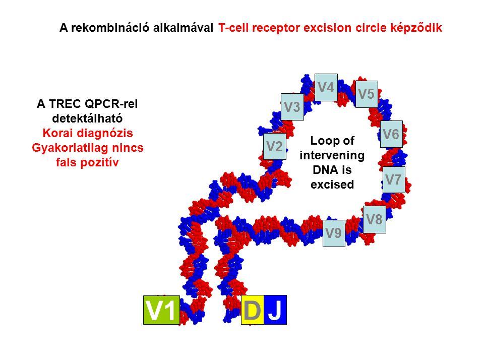 Loop of intervening DNA is excised V1 DJ V2 V3 V4 V8 V7 V6 V5 V9 A rekombináció alkalmával T-cell receptor excision circle képződik A TREC QPCR-rel detektálható Korai diagnózis Gyakorlatilag nincs fals pozitív