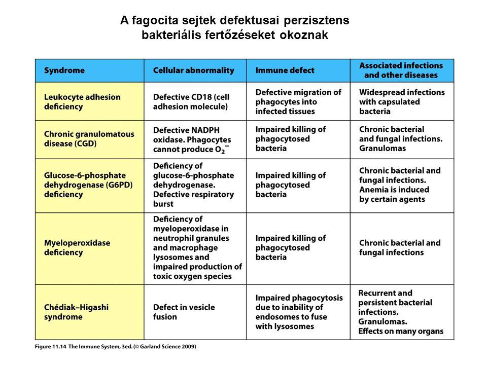 A fagocita sejtek defektusai perzisztens bakteriális fertőzéseket okoznak
