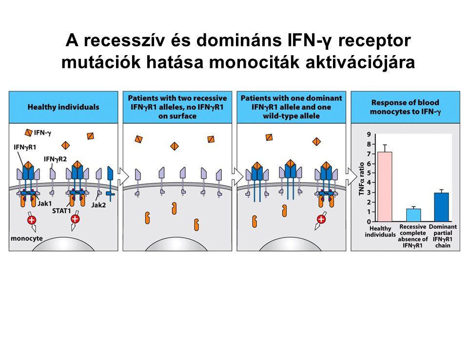 A recesszív és domináns IFN-γ receptor mutációk hatása monociták aktivációjára