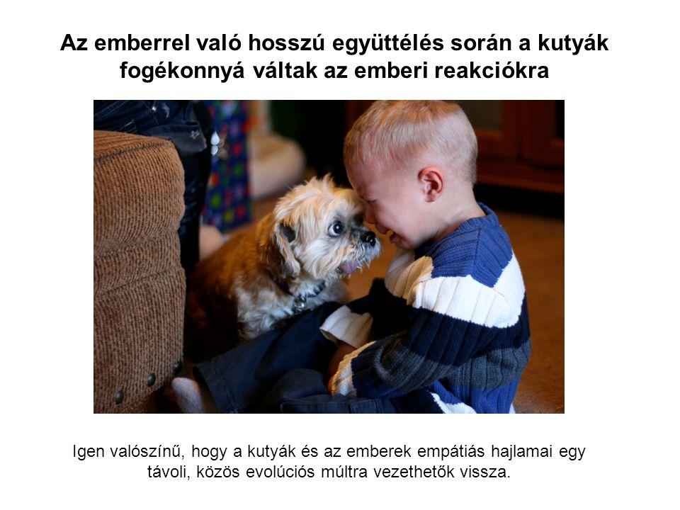 Igen valószínű, hogy a kutyák és az emberek empátiás hajlamai egy távoli, közös evolúciós múltra vezethetők vissza.