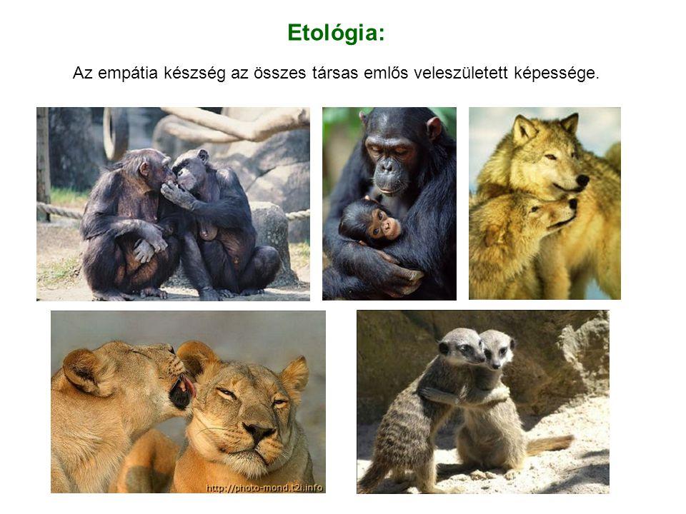Etológia: Az empátia készség az összes társas emlős veleszületett képessége.