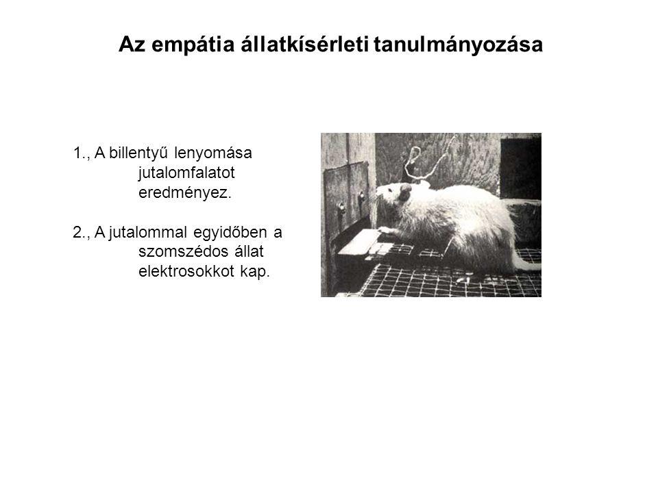 Az empátia állatkísérleti tanulmányozása 1., A billentyű lenyomása jutalomfalatot eredményez.