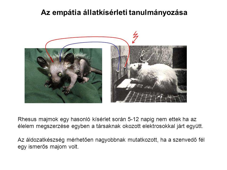 Az empátia állatkísérleti tanulmányozása Rhesus majmok egy hasonló kísérlet során 5-12 napig nem ettek ha az élelem megszerzése egyben a társaknak okozott elektrosokkal járt együtt.