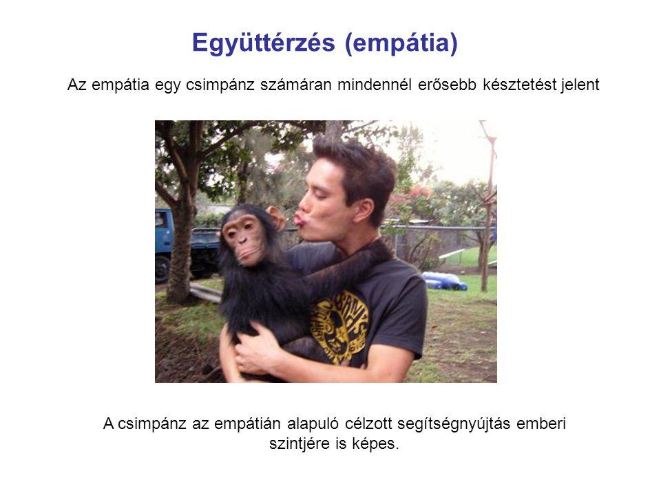 Az empátia egy csimpánz számáran mindennél erősebb késztetést jelent A csimpánz az empátián alapuló célzott segítségnyújtás emberi szintjére is képes.