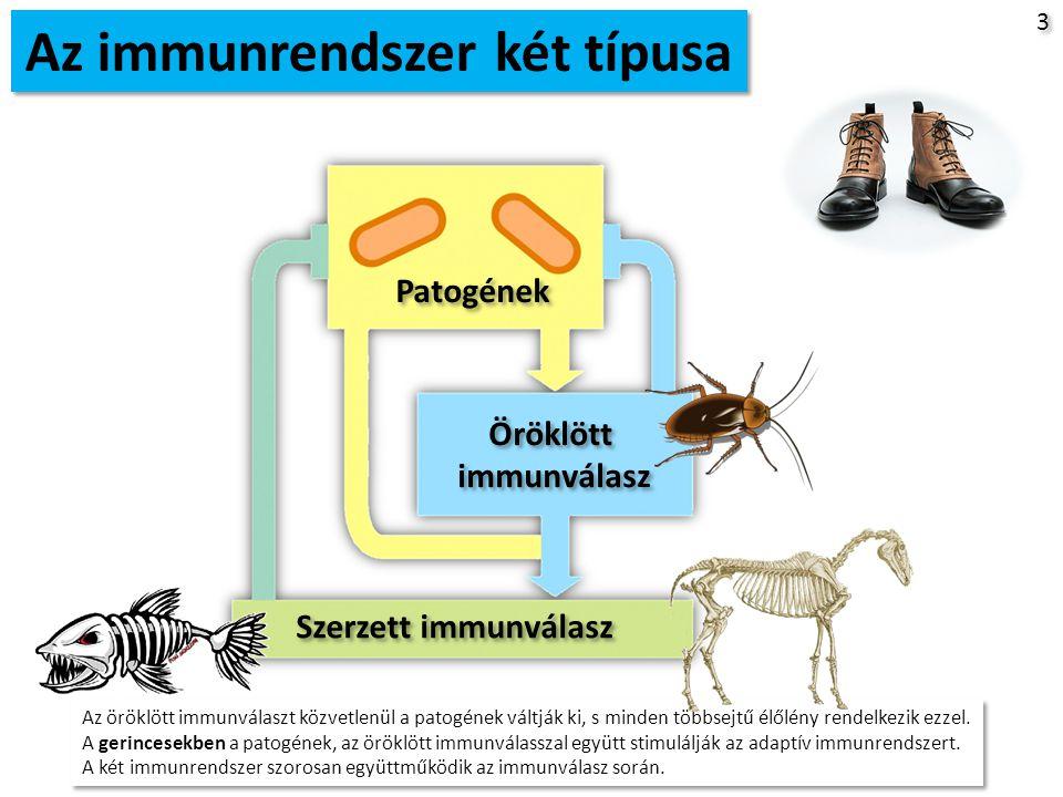 4 4 Az immunrendszer 2 típusa