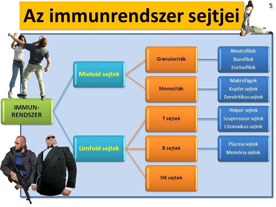 I. Öröklött Immunrendszer